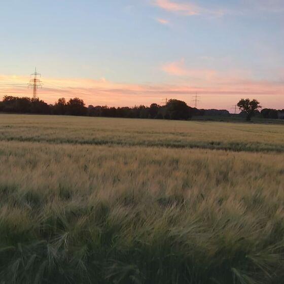 Foto: Z. Herschel, Morgendämmerung