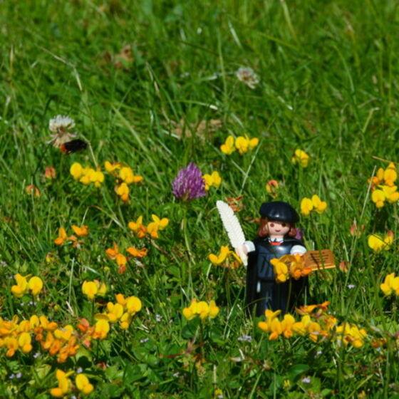 Buchmann Luther auf französischer Blumenwiese (FILEminimizer)