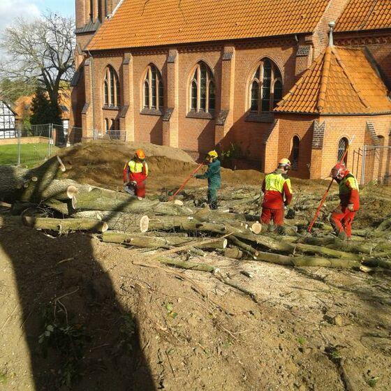 Baumfällungen hinter der St. Ludgeri Kirche