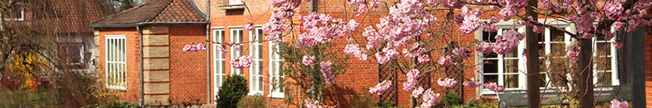 Kirschblüte mit Blick aufs Haupthaus