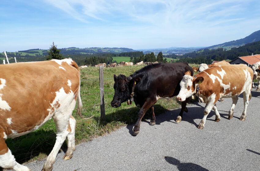 Gemeindefreizeit Allgäu