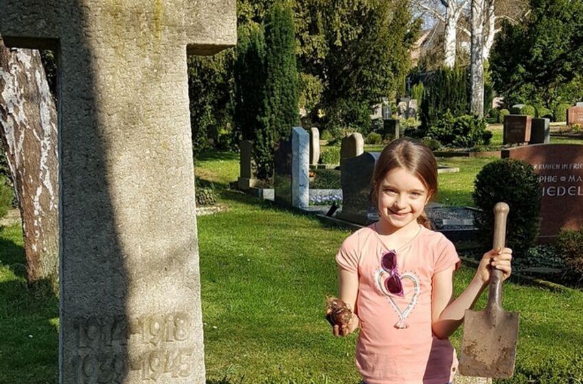 StNicolaiSarstedt_Blumenzwiebeln auf dem Friedhof
