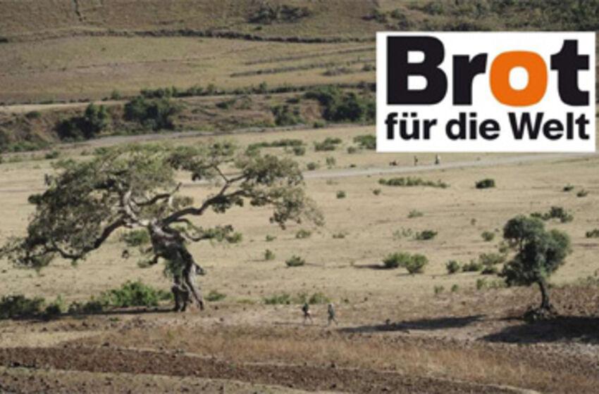 Seit 1900 ist der bewaldete Anteil Äthiopiens von 40 auf unter fünf Prozent geschrumpft. Foto: Christof Krackhardt