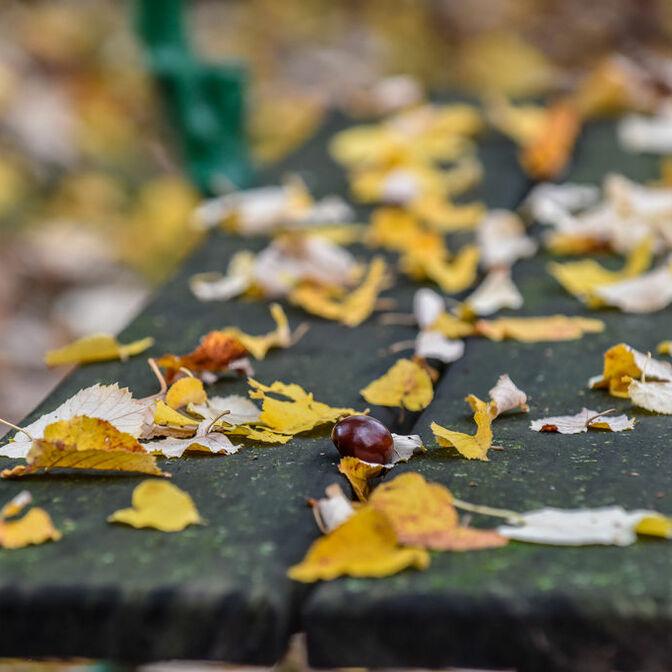 Friedhof Park Herbst Laub Kastanien Bank